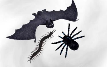 Spiders & Creepy Animals