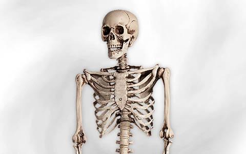 Skelett & Totenkopf Deko