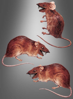 3-D Window Sticker Rats