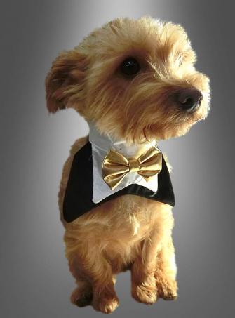 Halstuch für Hunde Fliege mit Kragen