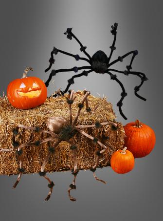 Riesige haarige Spinne 50 cm