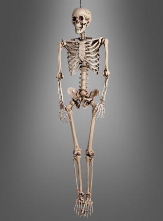 Lebensgroßes Skelett 160 cm