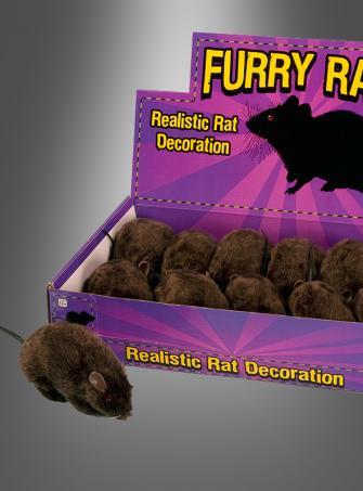 Pelzige Ratte