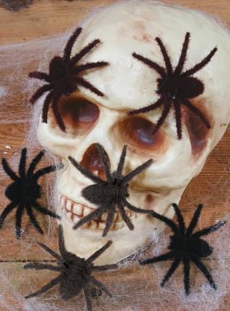 Kleine haarige Spinnen