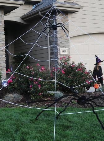 Riesiges Spinnennetz 7 Meter
