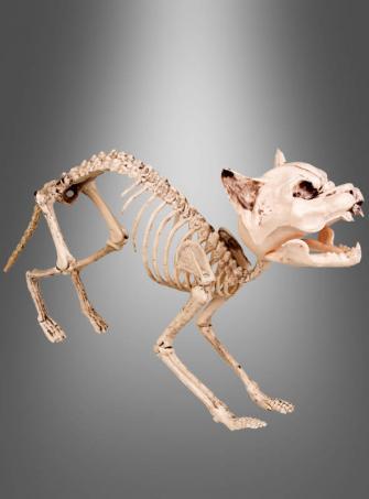 Halloween Skelett Katze - lebensgroß