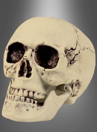 Schädel mit beweglichem Kiefer