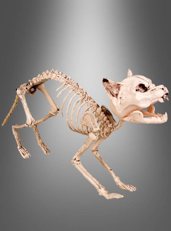 Halloween Skelett Katze Dekoration bei Kostümpalast.de