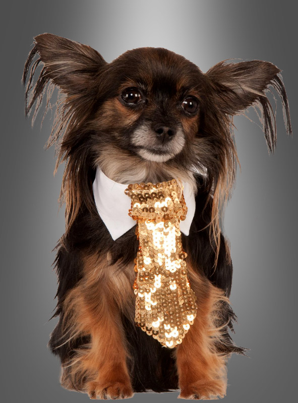 Golden Tie for Dogs