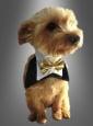 Bandana Bowtie for Dogs