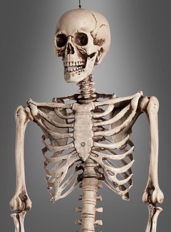 Life-Size Skeleton 160 cm